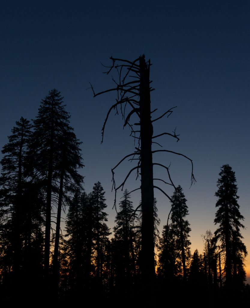 DEAD TREE by Peter Polkinghorne