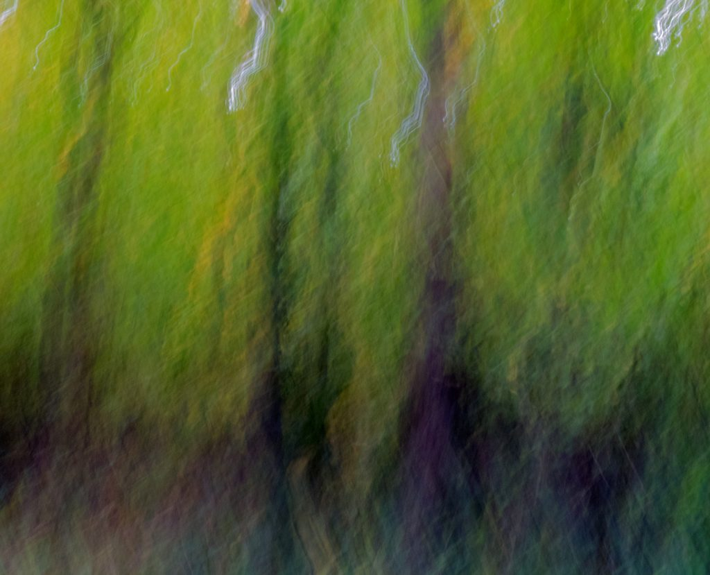 Impressions of the trees by Barry Sampson
