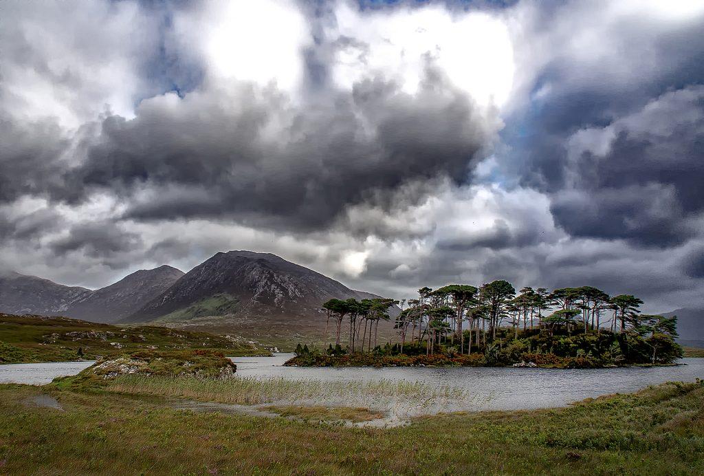 PINE ISLAND by Judith Gimber