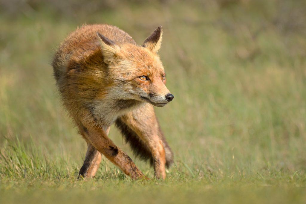 TANGO OR FOX TROT by Julia Wainwright