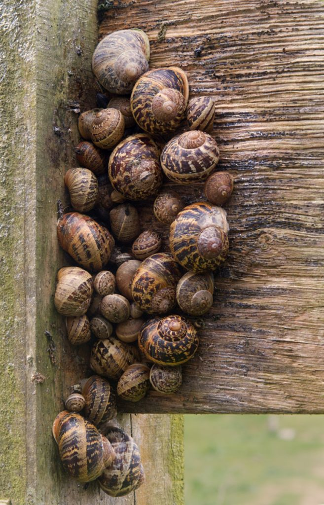 SNAIL HUDDLE by Peter Polkinghorne