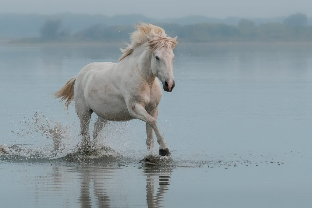 WHITE HORSE RUNNING FREE by Julia Wainwright